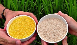 Filippine: agricoltori del Bicol dicono no al Golden Rice
