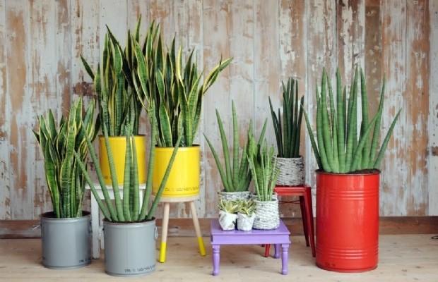 """tante piante in casa e """"cresce"""" l'aria pulita - econews green"""